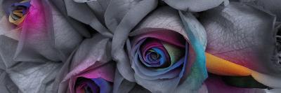 Flower Colors II--Art Print