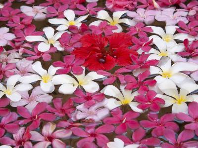 Flower Decoration, Udaipur, Rajasthan, India-Keren Su-Photographic Print