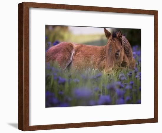 Flower Frolick VI-Ozana Sturgeon-Framed Photographic Print