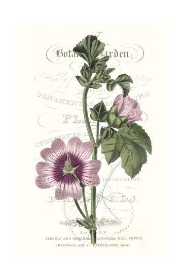 Flower Garden Varietals IV-Vision Studio-Premium Giclee Print