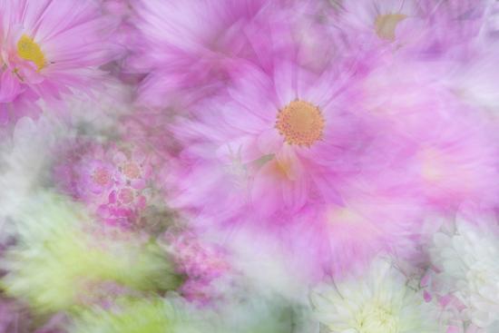 Flower Impressions I-Kathy Mahan-Photo