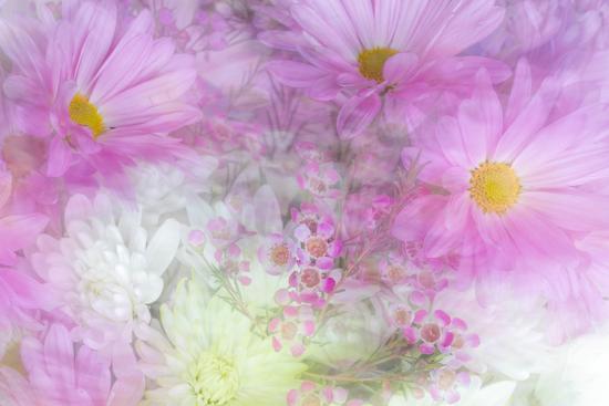 Flower Impressions II-Kathy Mahan-Photo