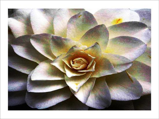 Flower in Full Bloom-Stephen Lebovits-Giclee Print
