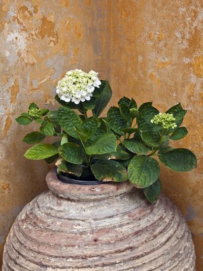 Flower in Pot, Crete, Greece-Adam Jones-Photographic Print