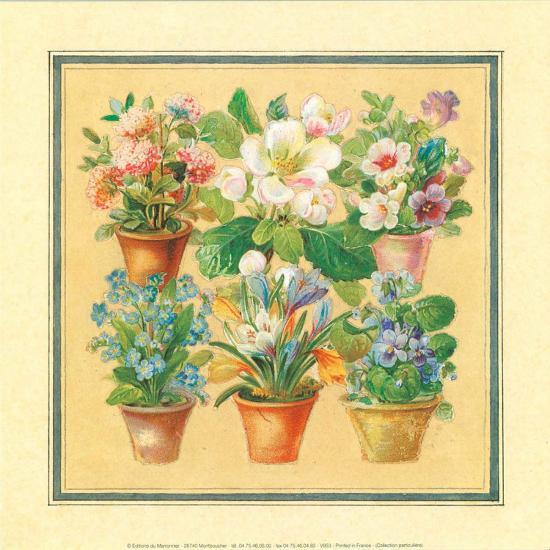 Flower IV--Art Print