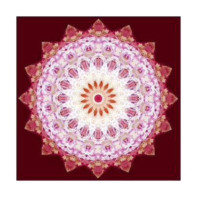 Flower Mandala Star X-Alaya Gadeh-Art Print