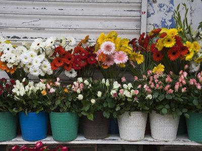 Flower Market, Port Louis, Mauritius-Walter Bibikow-Photographic Print