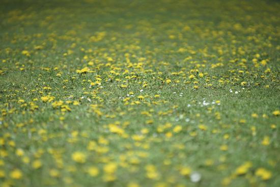 Flower meadow-Benjamin Engler-Photographic Print
