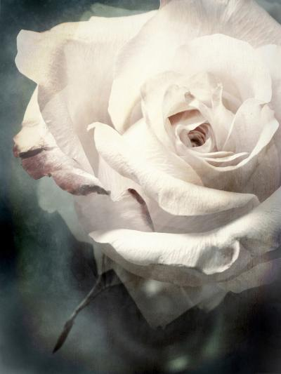 Flower of a White Rose, Texture, Composing-Alaya Gadeh-Photographic Print