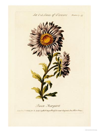 Flower Painting Made Easy, Being a Collection of Correct Outlines After Nature-Thomas Parkinson-Giclee Print