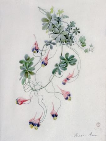 https://imgc.artprintimages.com/img/print/flower-pieces_u-l-puq99f0.jpg?p=0