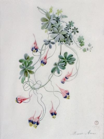 Flower Pieces- Marie-Anne-Giclee Print