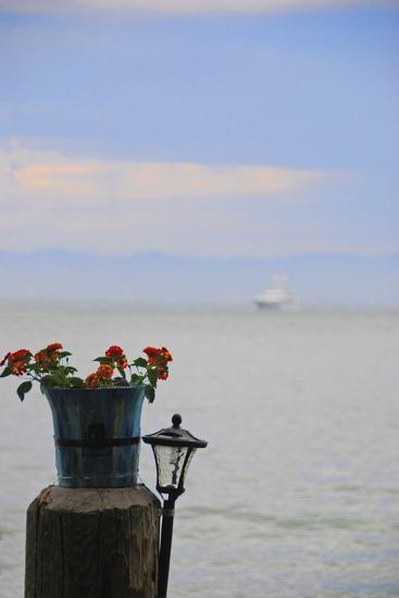Flower Pot on Sausalito Pier, California-Anna Miller-Photographic Print
