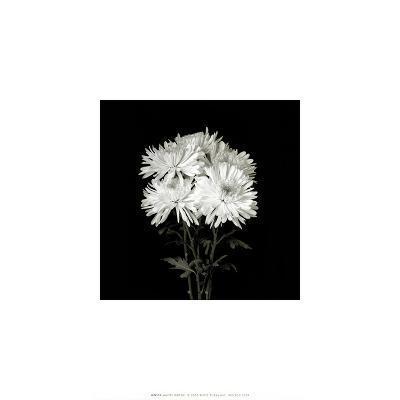 Flower Series IX-Walter Gritsik-Art Print