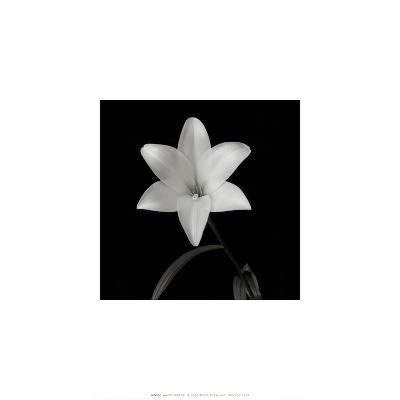 Flower Series VI-Walter Gritsik-Art Print