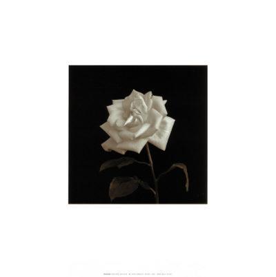 Flower Series VIII-Walter Gritsik-Art Print