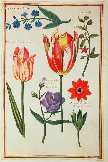 Flower Studies-Nicolas Robert-Giclee Print