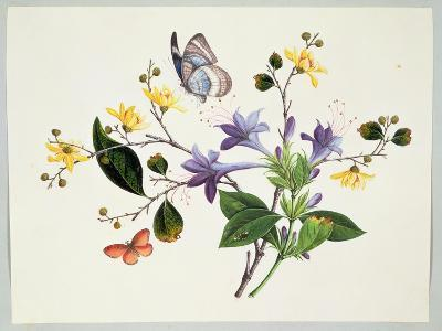 Flower Study and Insects--Giclee Print