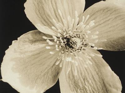 https://imgc.artprintimages.com/img/print/flower_u-l-po23mn0.jpg?p=0