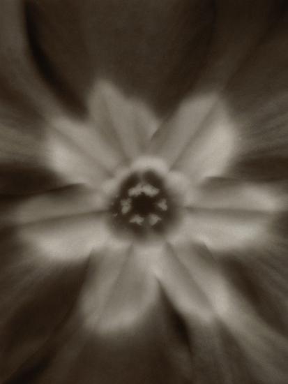 Flower-Graeme Harris-Photographic Print