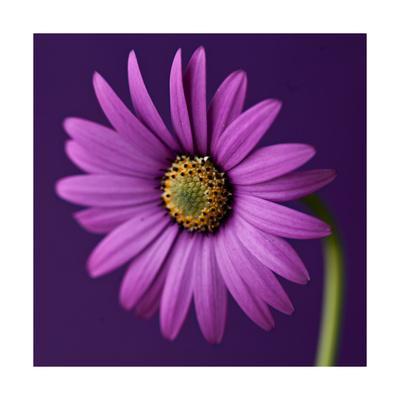 https://imgc.artprintimages.com/img/print/flower_u-l-pyo05y0.jpg?p=0