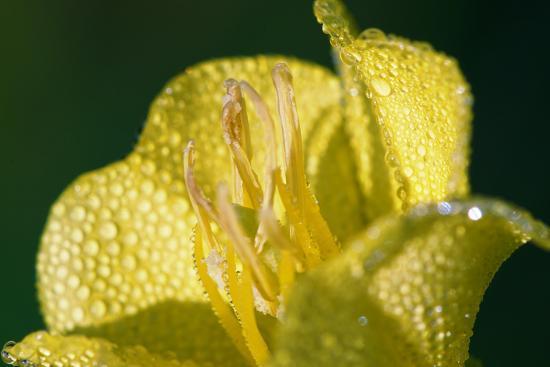 Flower-Gordon Semmens-Photographic Print