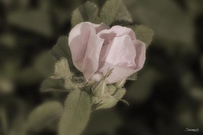 https://imgc.artprintimages.com/img/print/flower_u-l-q10pizb0.jpg?p=0
