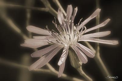 https://imgc.artprintimages.com/img/print/flower_u-l-q10pkd80.jpg?p=0