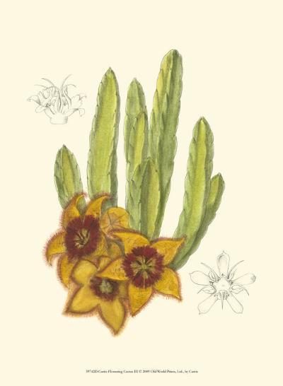 Flowering Cactus III-Samuel Curtis-Art Print