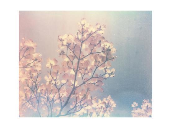 Flowering Dogwood I-Jason Johnson-Art Print