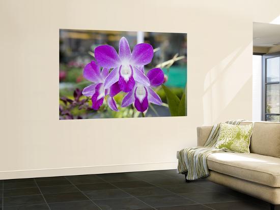Flowering Orchid-Holger Leue-Wall Mural