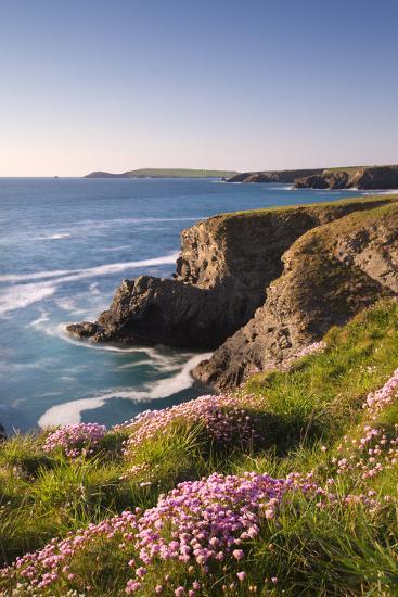 Flowering Sea Thrift (Armeria Maritima) on the Cornish Clifftops Near Porthcothan, Cornwall-Adam Burton-Photographic Print