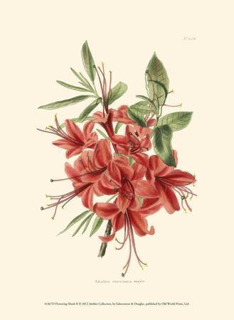 https://imgc.artprintimages.com/img/print/flowering-shrub-ii_u-l-f5bww30.jpg?p=0