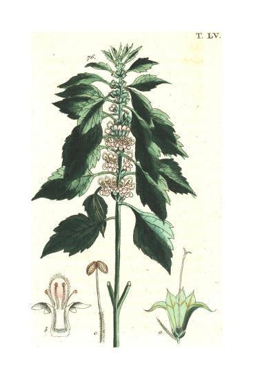 Flowering Stems Botanical Illustrations--Art Print