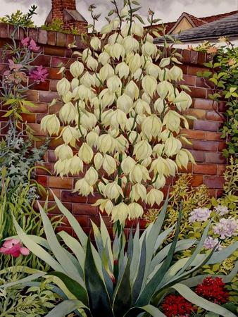 https://imgc.artprintimages.com/img/print/flowering-yucca_u-l-po22ju0.jpg?p=0