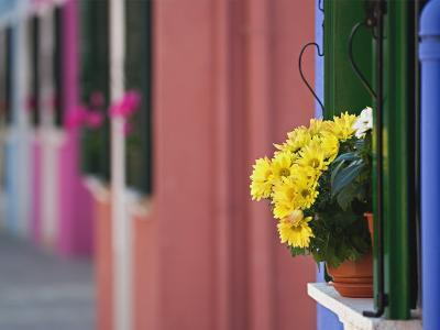 Flowerpot on Window Ledge and Multicolored Buidings, Burano, Italy-Adam Jones-Photographic Print
