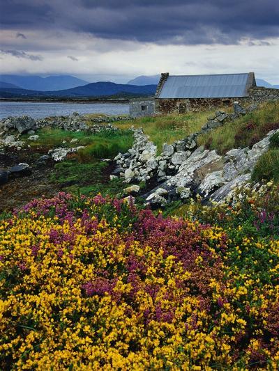 Flowers Along Carna Bay-Richard Cummins-Photographic Print