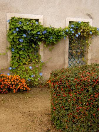 https://imgc.artprintimages.com/img/print/flowers-along-stucco-building-burgundy-france_u-l-p59kuo0.jpg?p=0