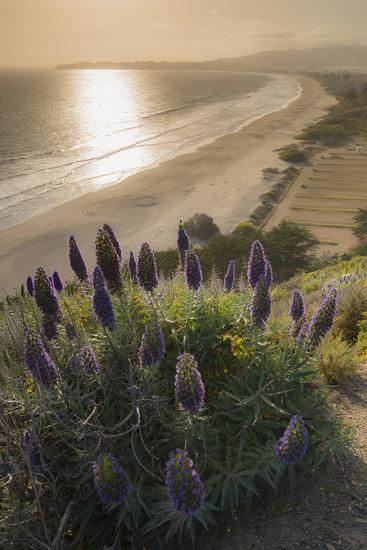 Flowers Along the Pacific Coast Highway in California-Jeff Mauritzen-Photographic Print