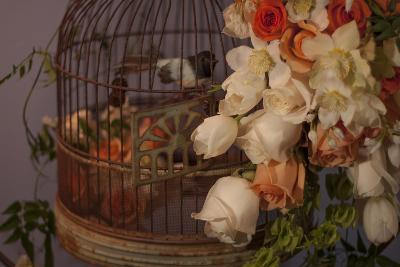 Flowers and Bird Cage II-Rita Crane-Photographic Print