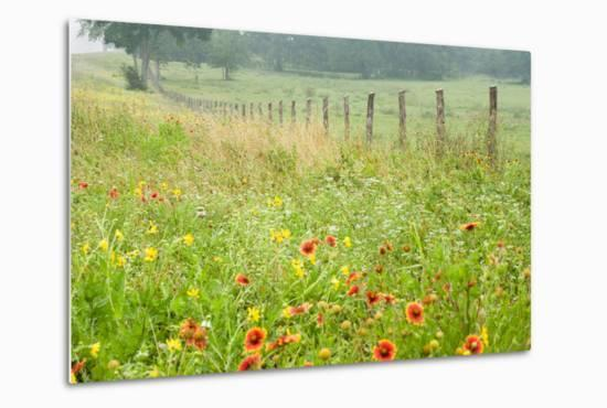 Flowers and Fence-Karin Connolly-Metal Print