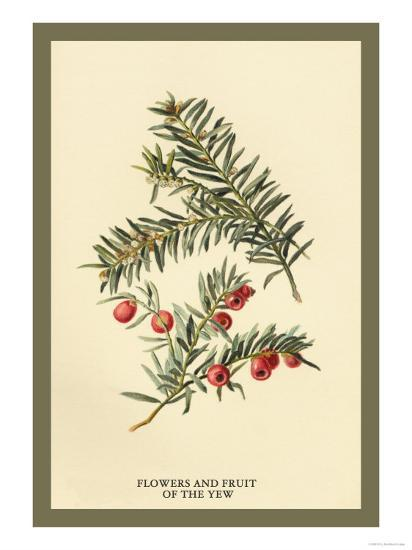 Flowers and Fruit of the Yew-W^h^j^ Boot-Art Print
