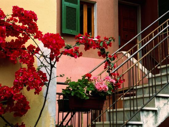 Flowers and Painted Houses in Town in Cinque Terre, Manarola, Liguria, Italy-Diana Mayfield-Photographic Print