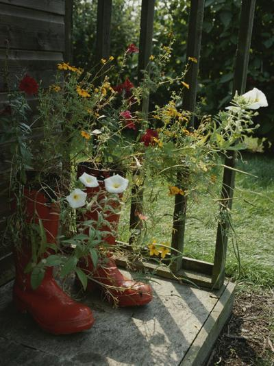 Flowers Bloom from an Unlikely Place-A Pair of Red Boots on a Porch-Jonathan Blair-Photographic Print