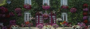 Flowers Breton Home Brittany France