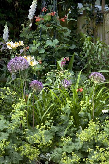 Flowers in a garden-Richard Bryant-Photo