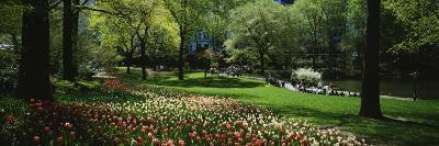 Flowers in a Park, Central Park, Manhattan, New York, USA--Photographic Print