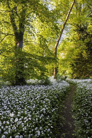 Flowers in a Woods Near Badbury Hill, Oxford, Oxfordshire, England, United Kingdom, Europe-Matthew Williams-Ellis-Photographic Print