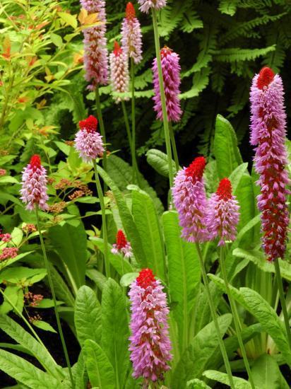 Flowers in Garden, Victoria, British Columbia, Canada-Darlyne A^ Murawski-Photographic Print