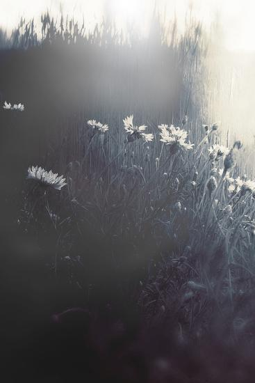 Flowers in Long Grass-Mia Friedrich-Photographic Print